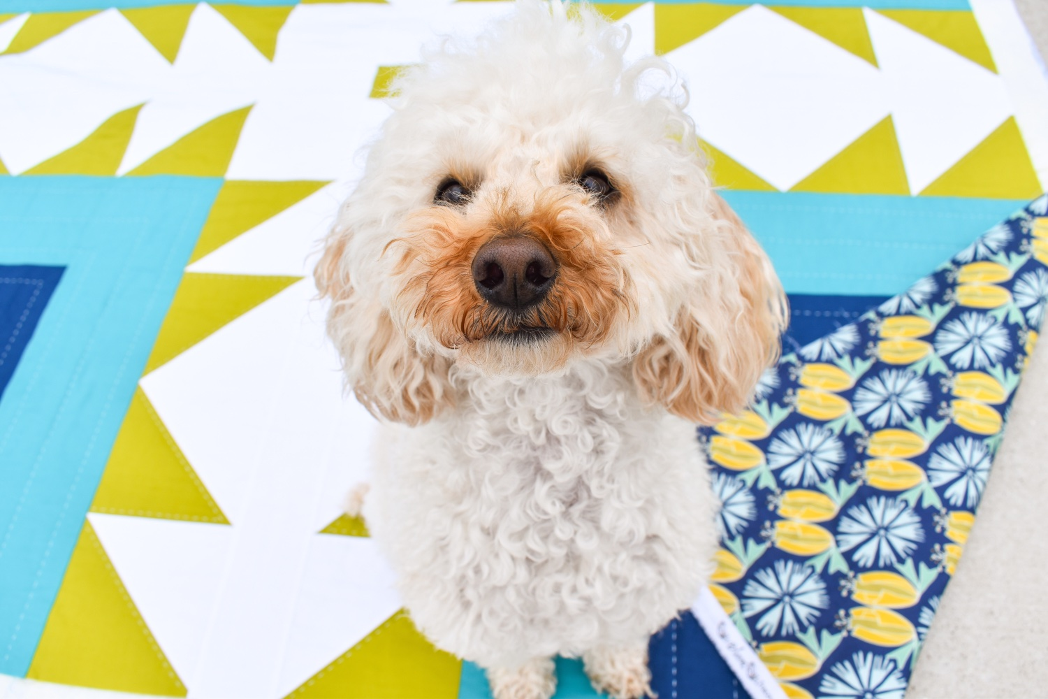 Dogs on Patchwork & Poodles Quilts!
