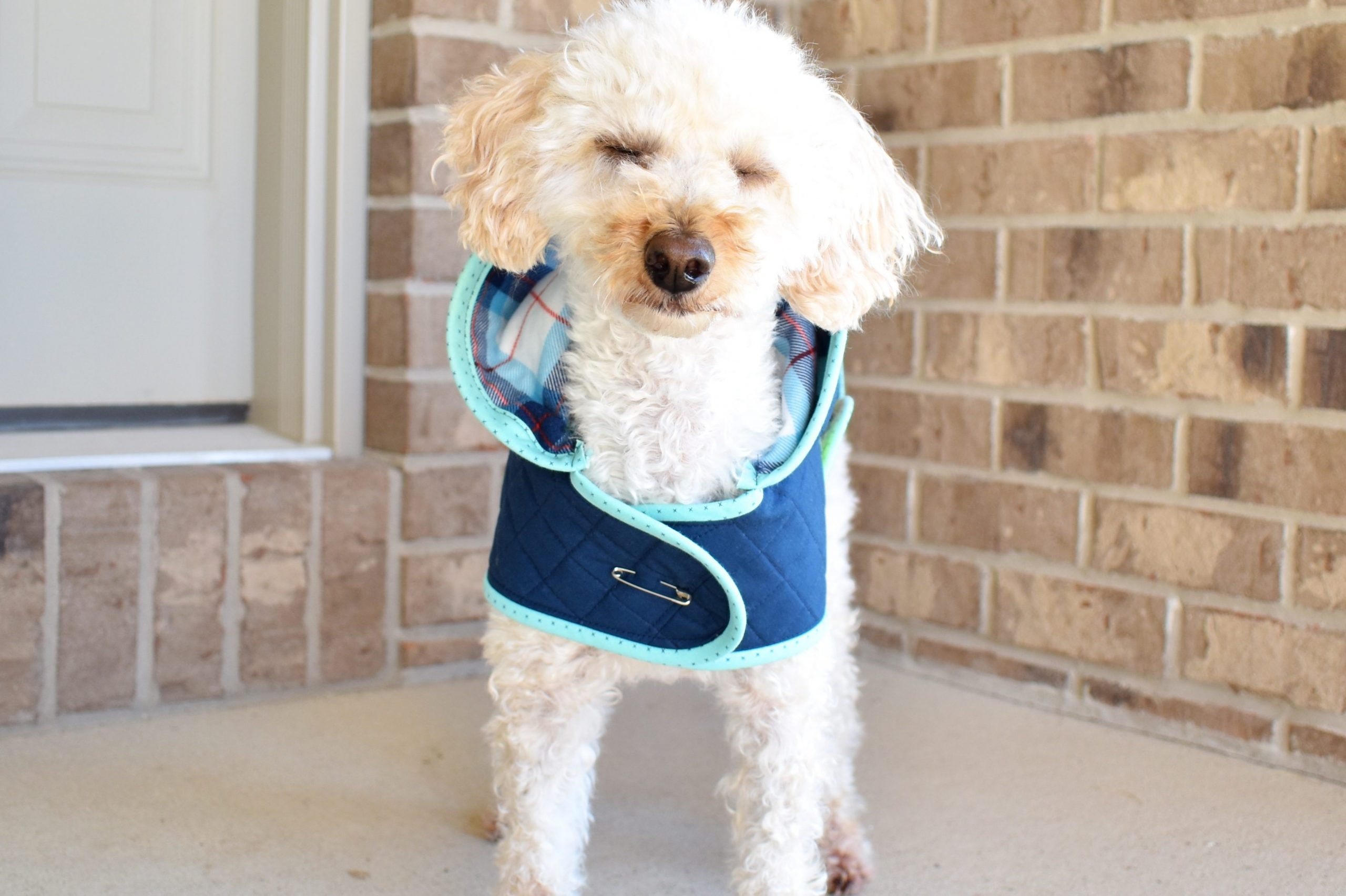 A dog quilted jacket