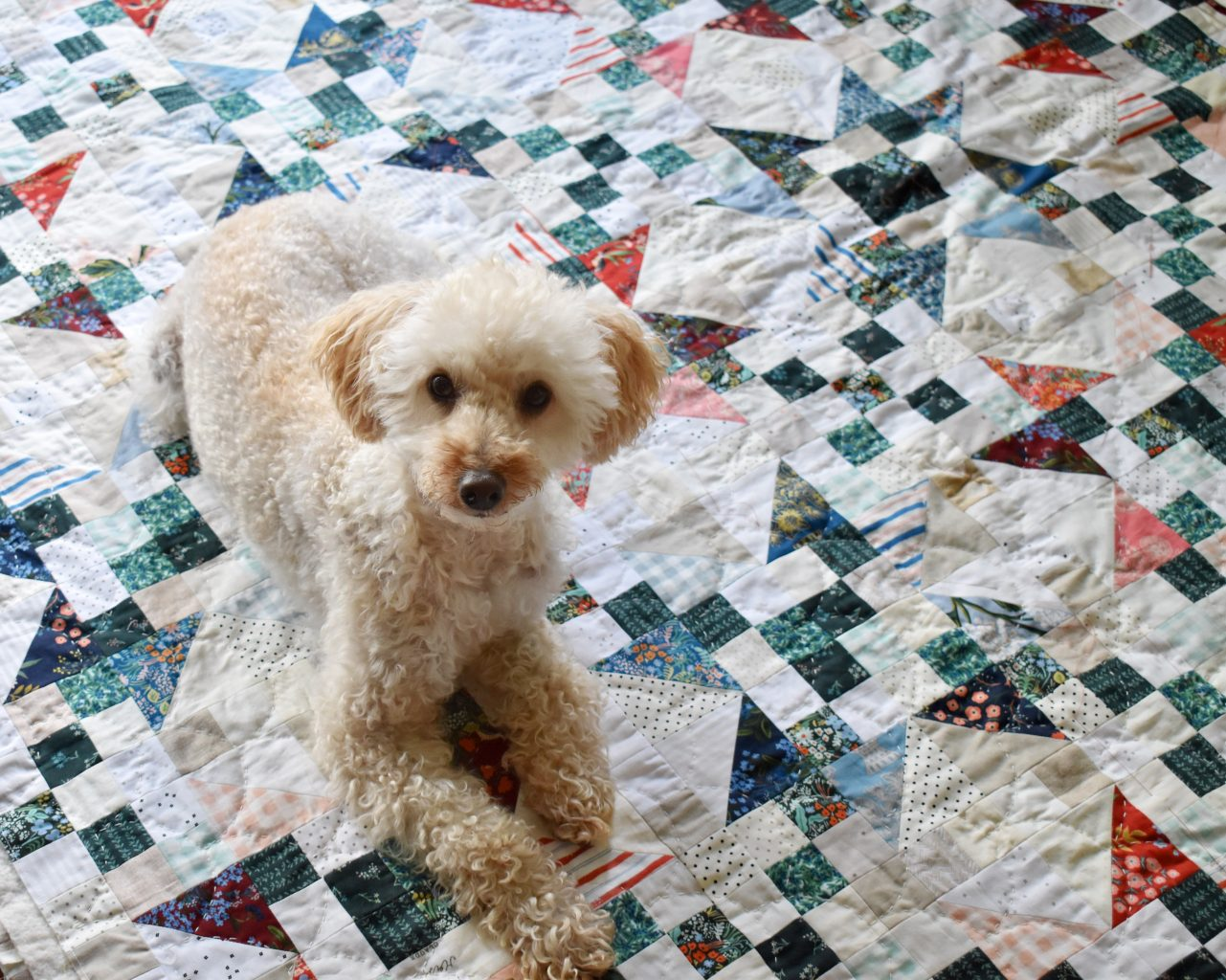Riley the poodle enjoying this Starlite quilt